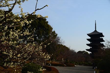 五重塔と白梅