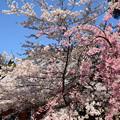 Photos: ピンクと白と~~