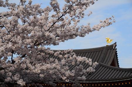 桜の中の鳳凰