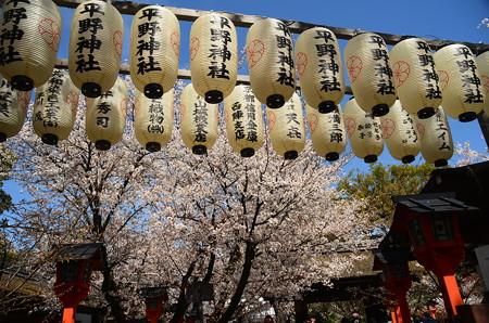 桜の華やぎ