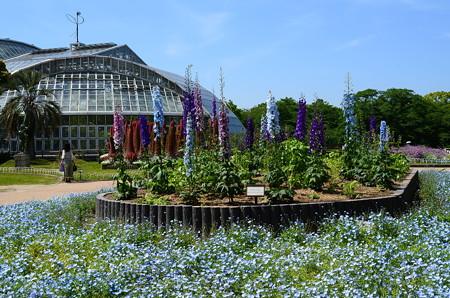蒼い植物園