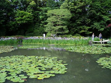 花菖蒲咲く白虎池