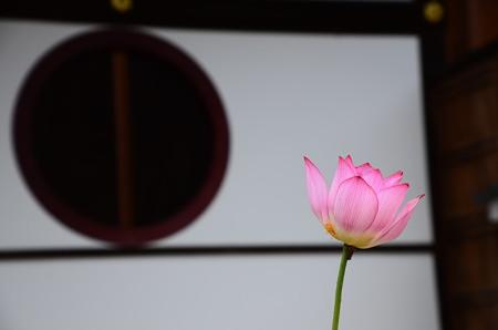 円窓と毎葉蓮(マイヨウレン)