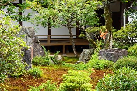 鬼百合咲く六道の庭