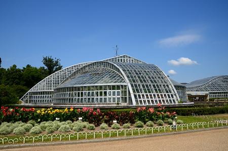 夏景色の植物園