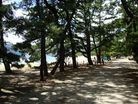 天橋立の松並木