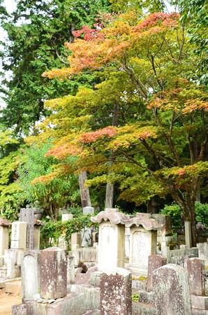 墓地の色付き