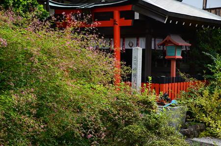 天寧寺の萩