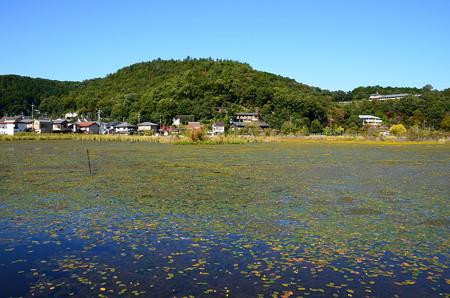 一面に狸藻咲く深泥池