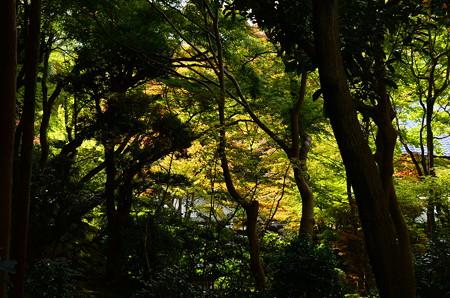 大豊神社から見る清宗庵