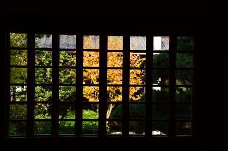 窓越しの黄葉