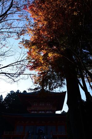 法華総持院東塔を飾る色付き