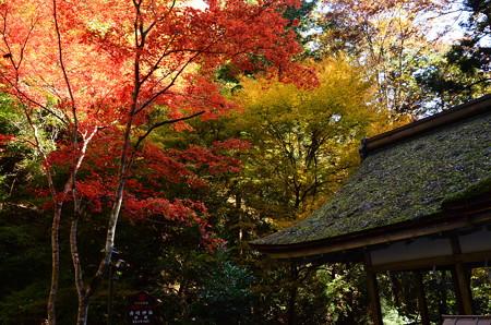 由岐神社脇の色付き