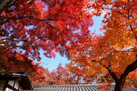 秋空を染める紅葉