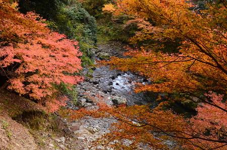 清滝川の紅葉