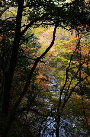 高山寺前の色付き