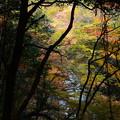 Photos: 高山寺前の色付き
