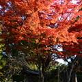 会津藩墓地脇の紅葉
