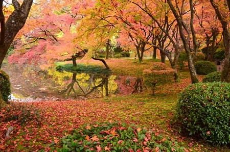 秋色の府立植物園