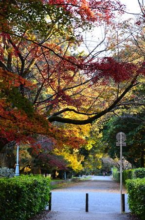 京都御苑の色付き