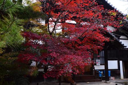 庫裡前の紅葉
