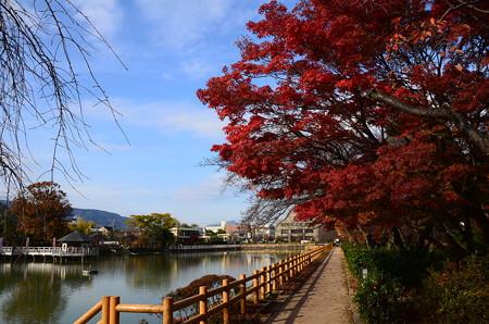 八丈が池の紅葉