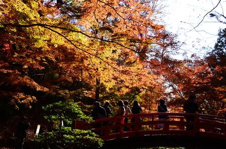 鶯橋を包む紅葉