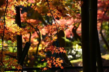 色鮮やかな秋彩