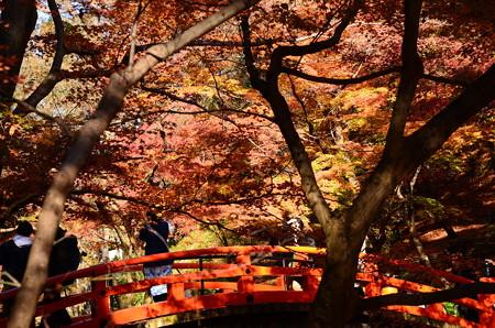 紅葉の鶯橋