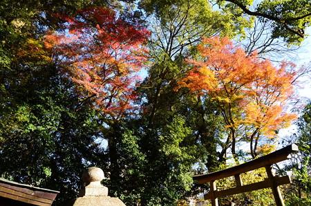 平野神社の紅葉