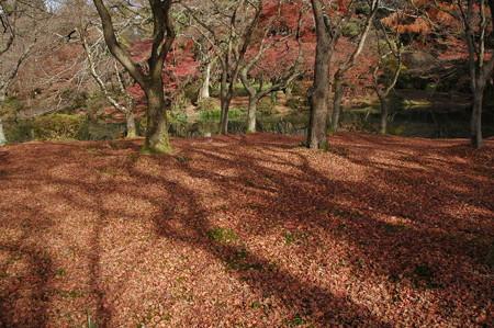散りもみじの京都府立植物園