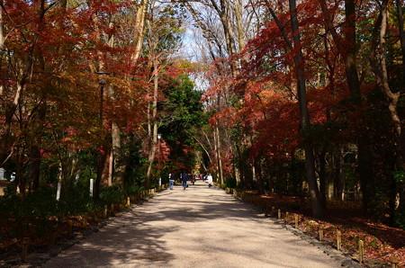紅葉の中の参道
