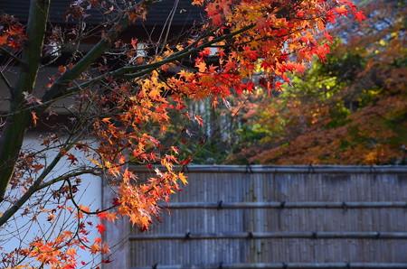 仁和寺の残り紅葉