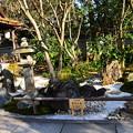 Photos: 豊栄(とよさか)の庭