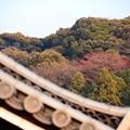 Photos: 東山の赤い実