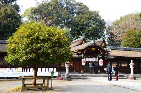 本殿と右近の橘