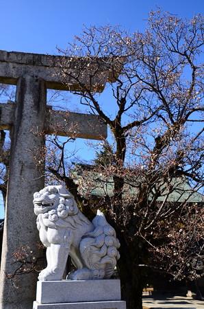 狛犬と咲き始めた白梅