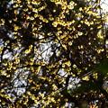 写真: 早春の燦めき