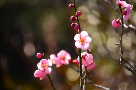 春の日射しに~
