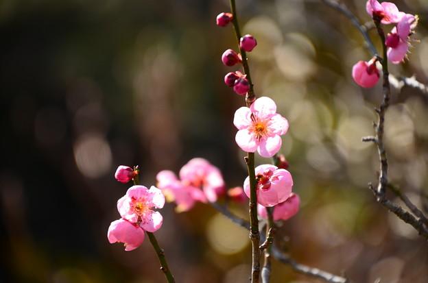 Photos: 春の日射しに~