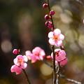 写真: 春の日射しに~