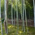 写真: 竹藪の光
