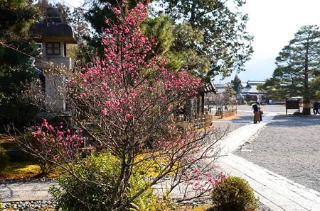 梅咲く清涼寺