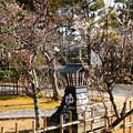 写真: 湯どうふ竹仙の梅