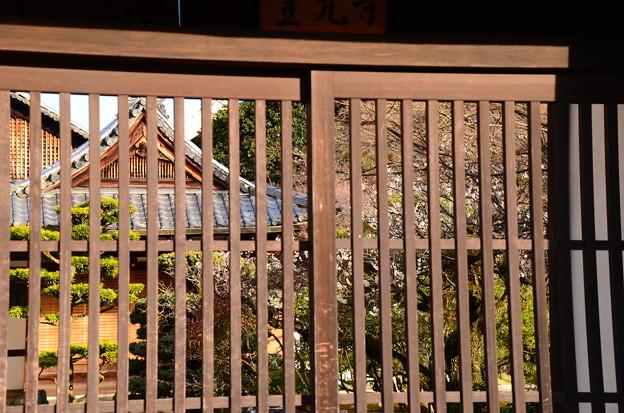写真: 格子戸越しの白梅