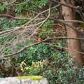 写真: 遠くの翡翠(カワセミ)
