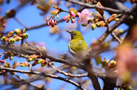 春はすぐそこ~