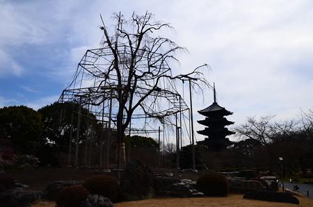 春を待つ不二桜と五重塔