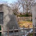 写真: 三春滝桜