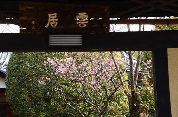 写真: 了蓮寺の梅